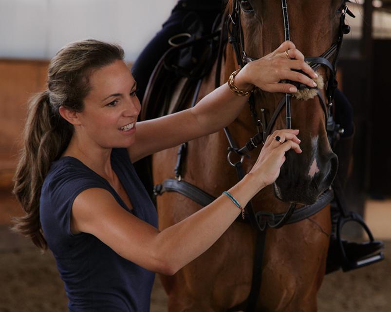 Horse medecine equimetre veterinarian