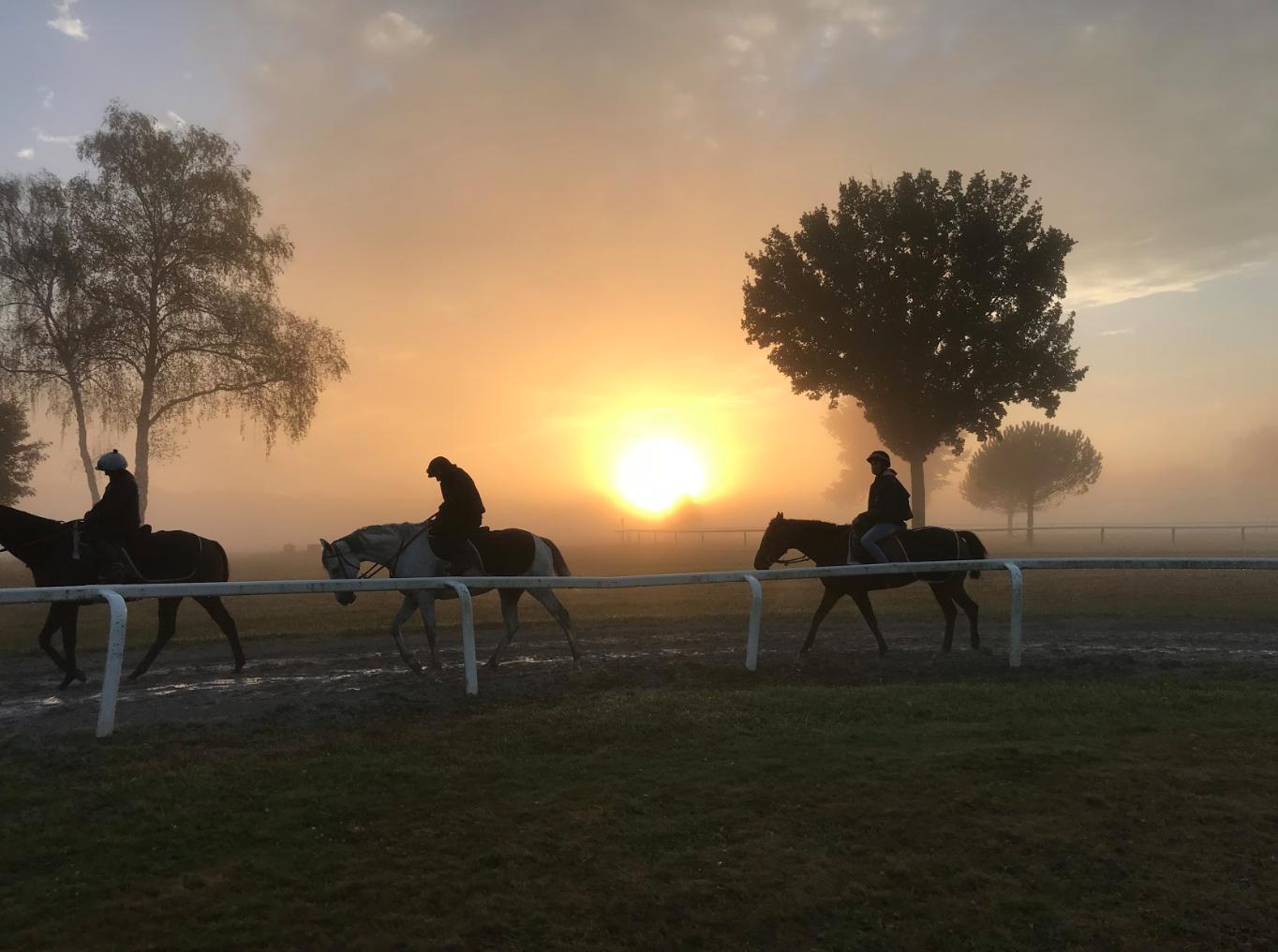 Optimisation préparation chevaux