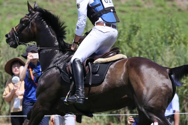 Entrainement cheval de sport cardio ECG