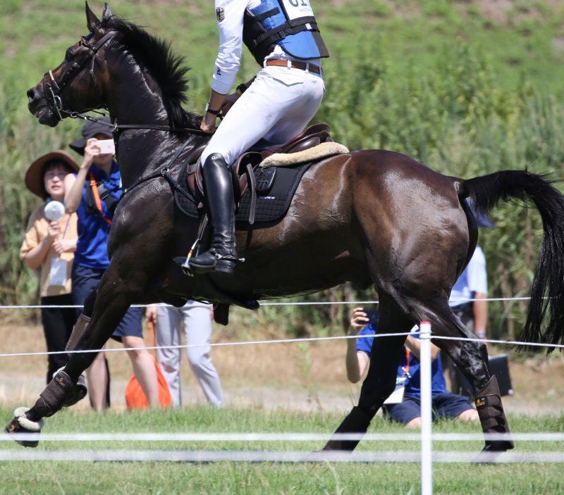 Entrainement cheval de sport cardio ECG Jeux olympics
