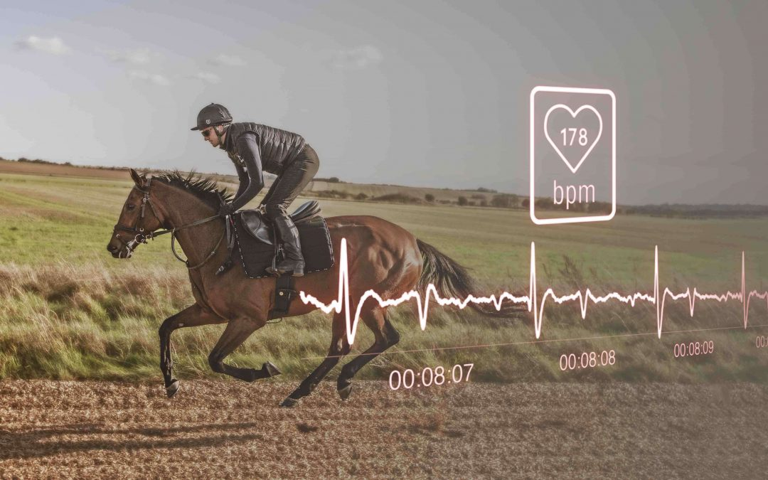 Racehorse heart rate