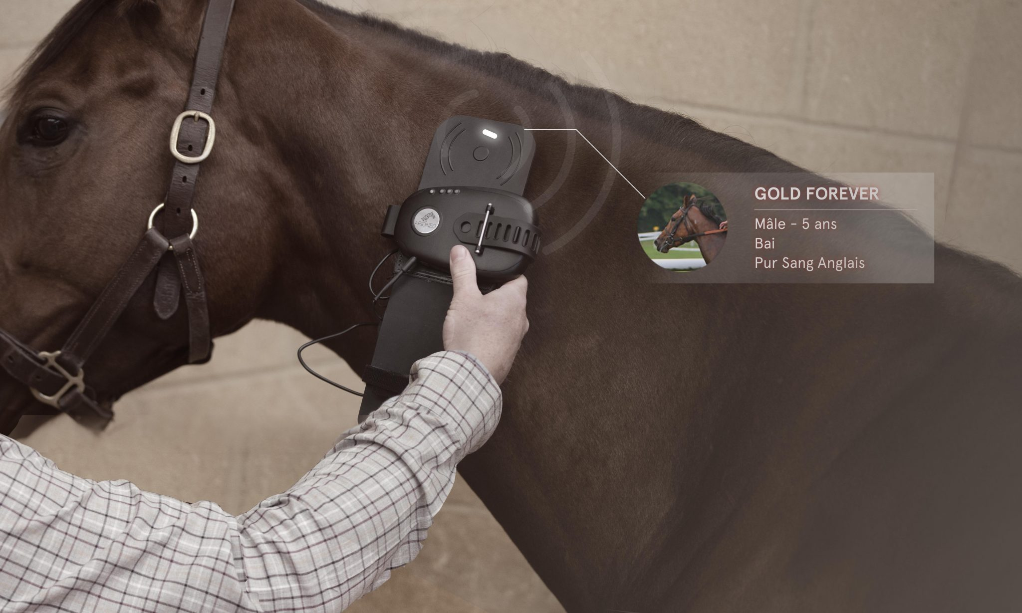 EQUIMETRE lecture Puce vétérinaire du cheval