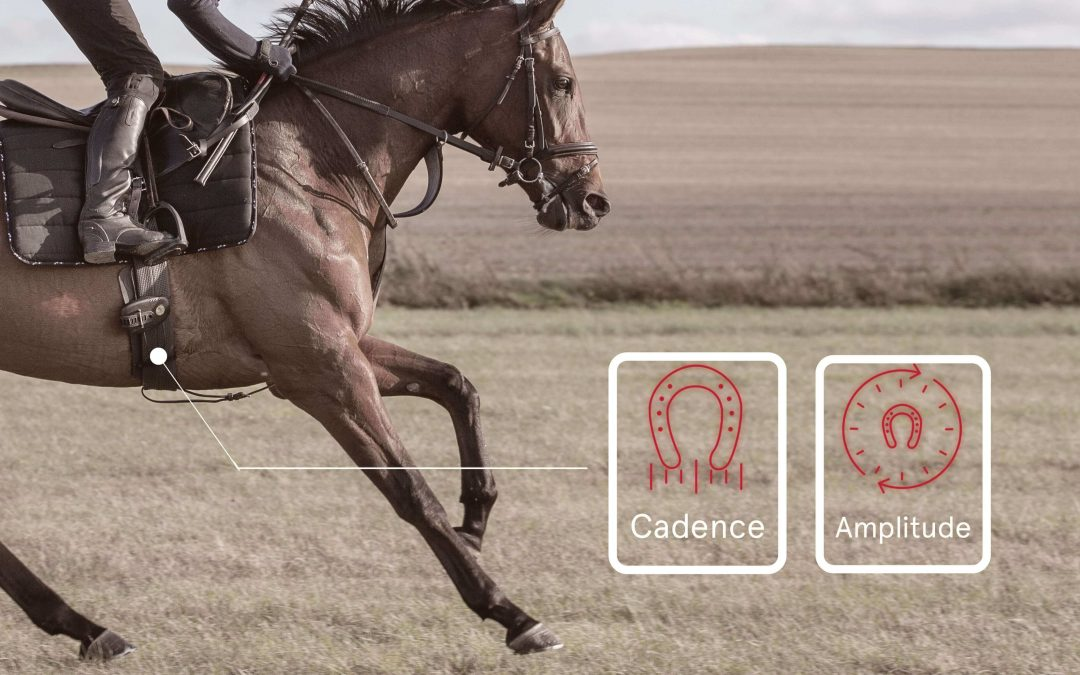 locomotion et distance chez cheval de course