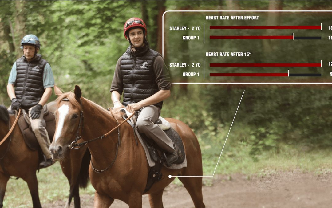Monitoring of young horses
