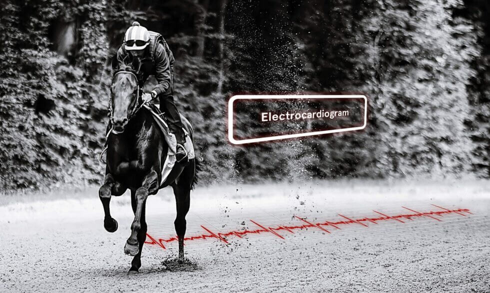 ECG of the athletic horse