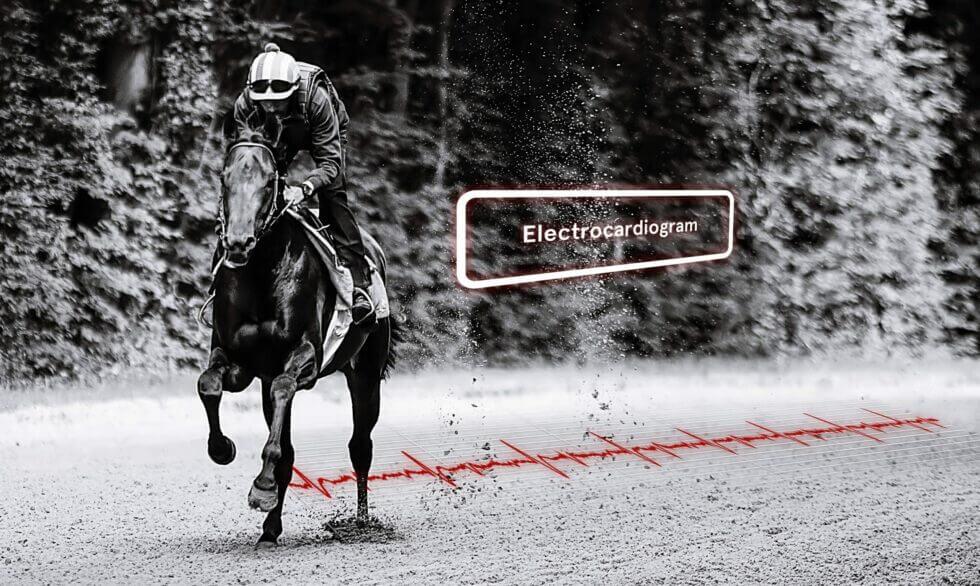 ECG du cheval