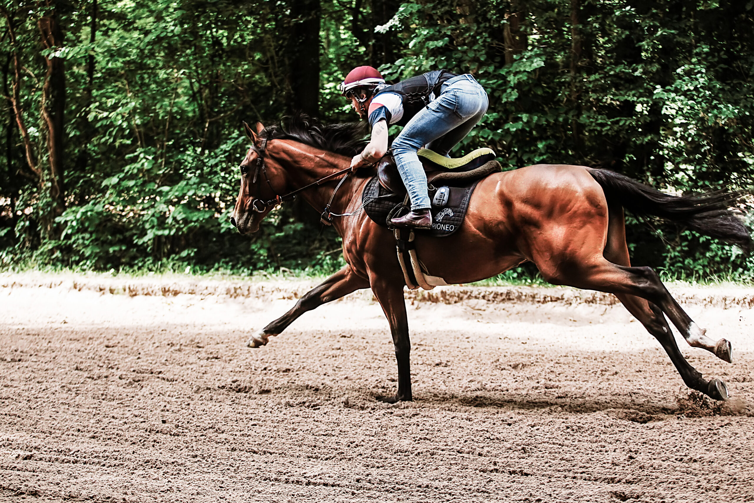 Amplitude du cheval de course au galop
