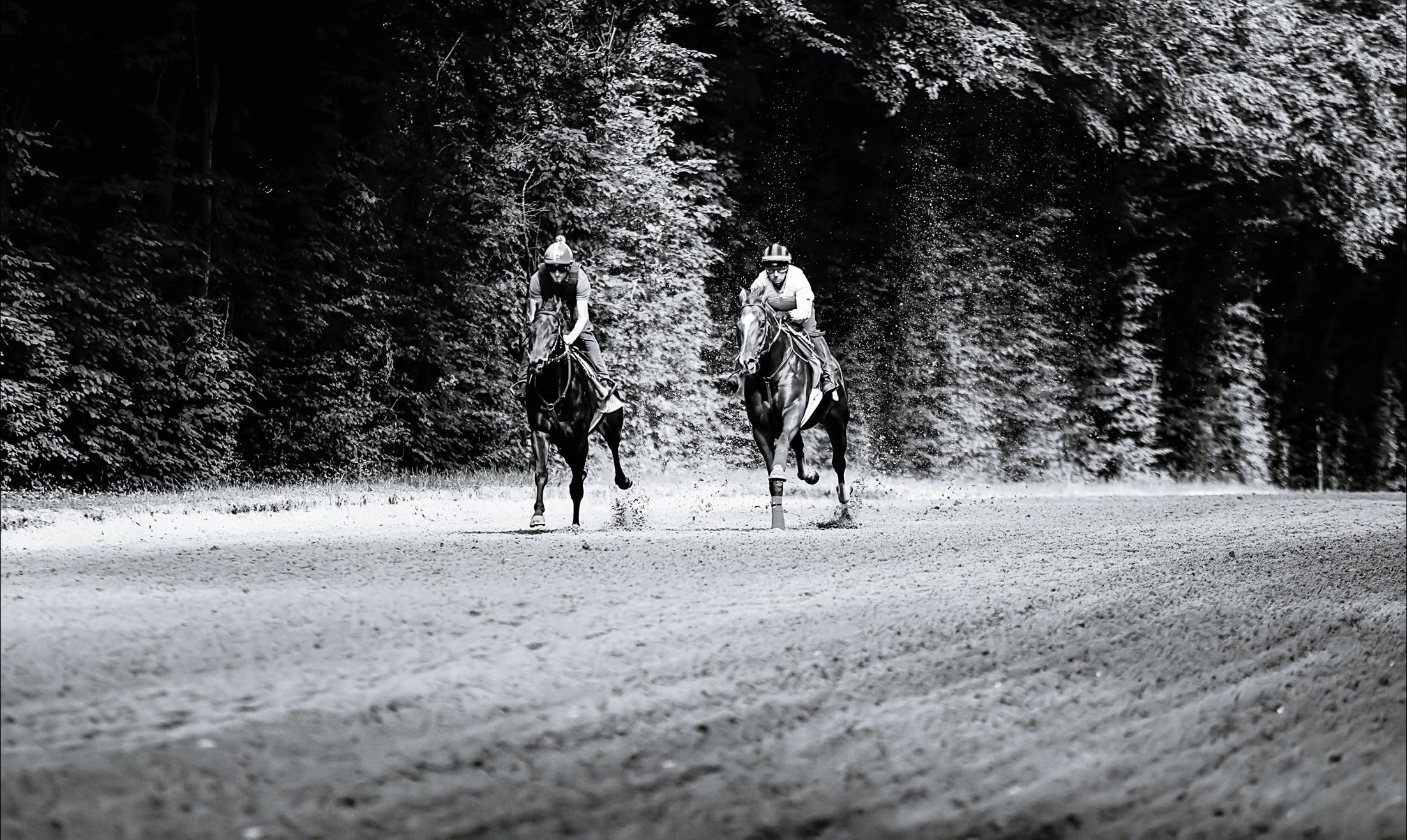 exercice standardisé entraînement chevaux de course arioneo