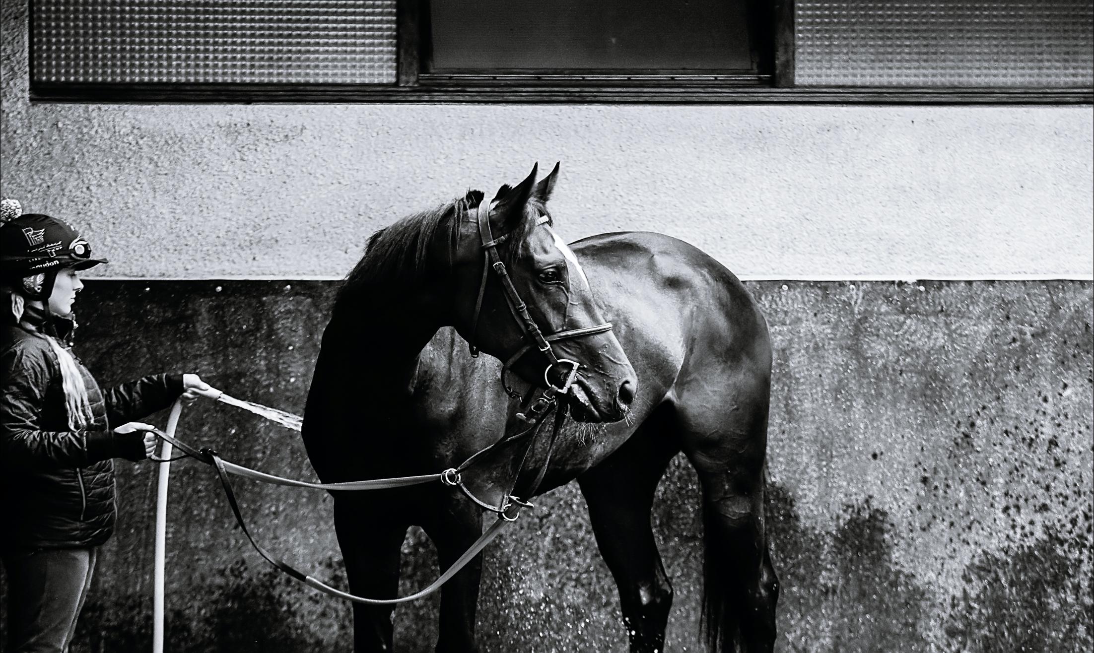 objectiver l'état de forme des chevaux de course equimetre