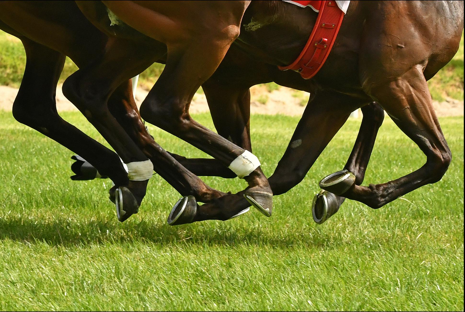 surveiller l'impact d'une course d'un galopeur