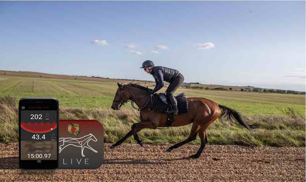 Horse galloping during training with live data visualisation