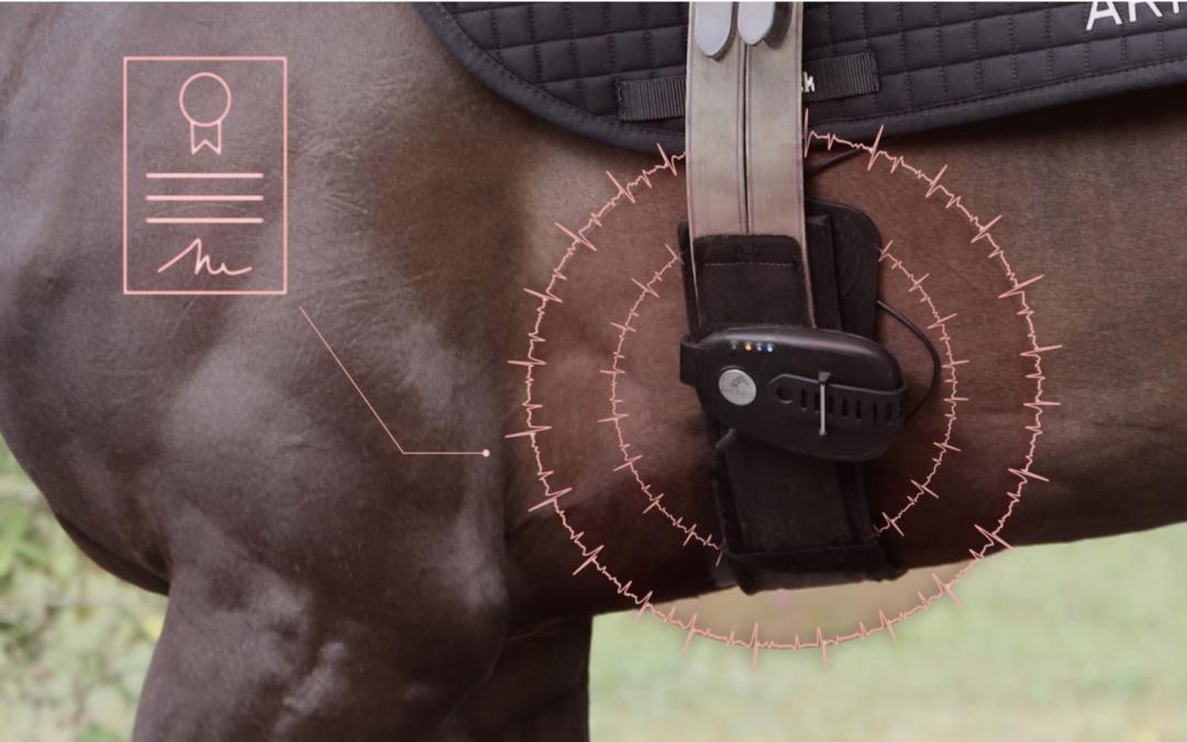 equimetre electrode racehorses