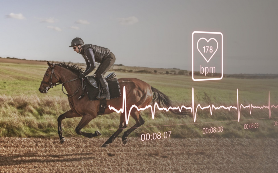 fréquence cardiaque cheval course