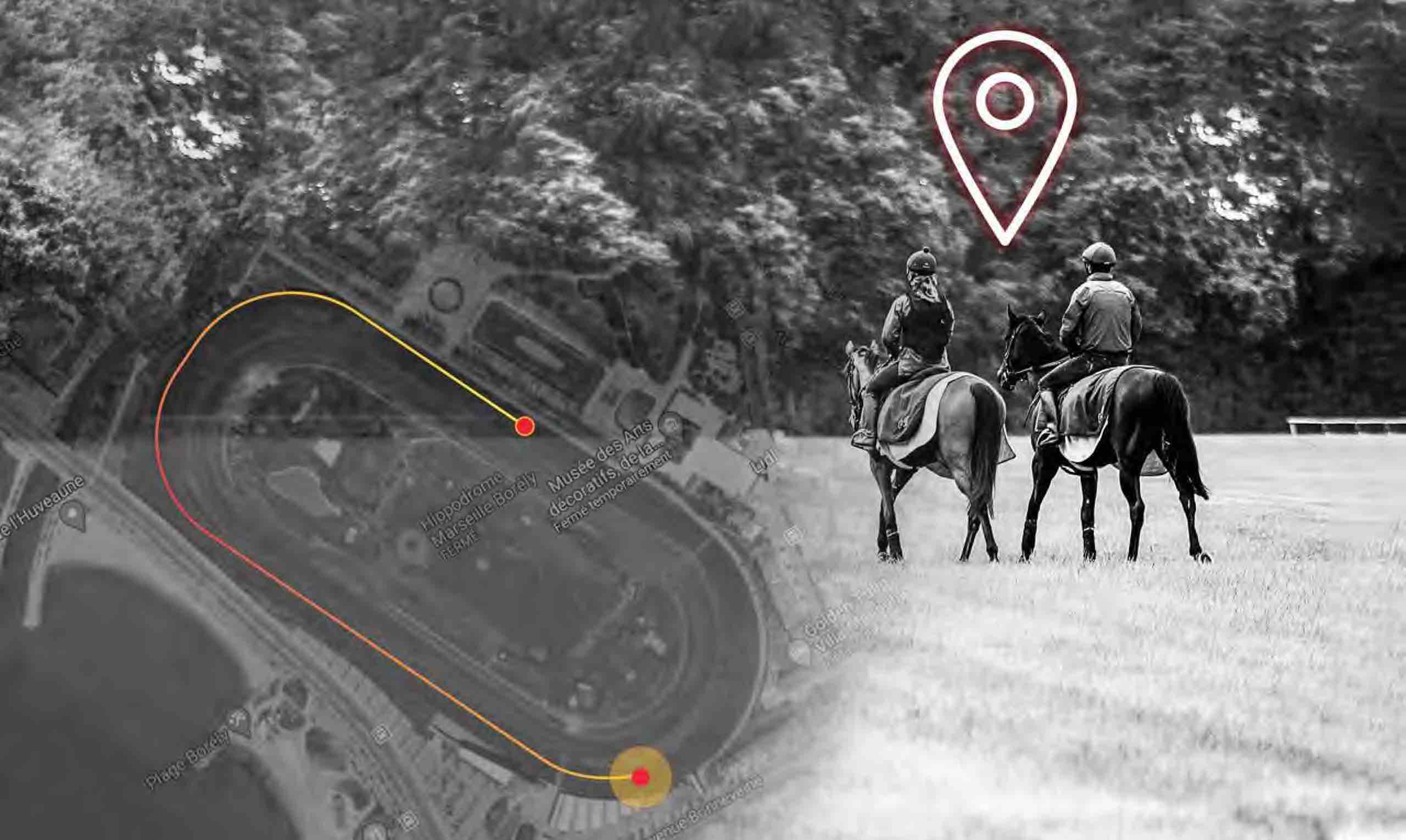 Racehorses during training with sensor collecting gps data