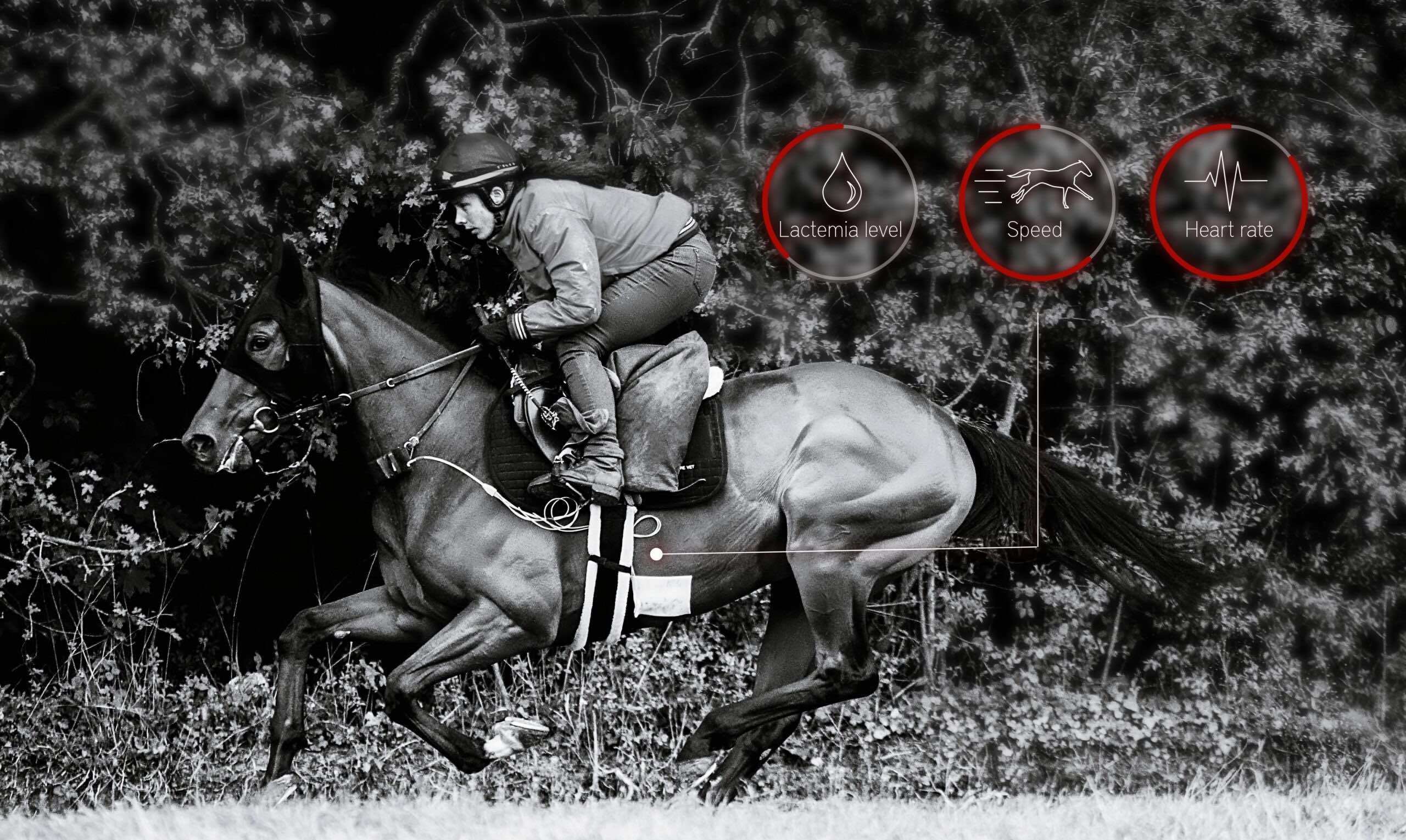 cheval data course