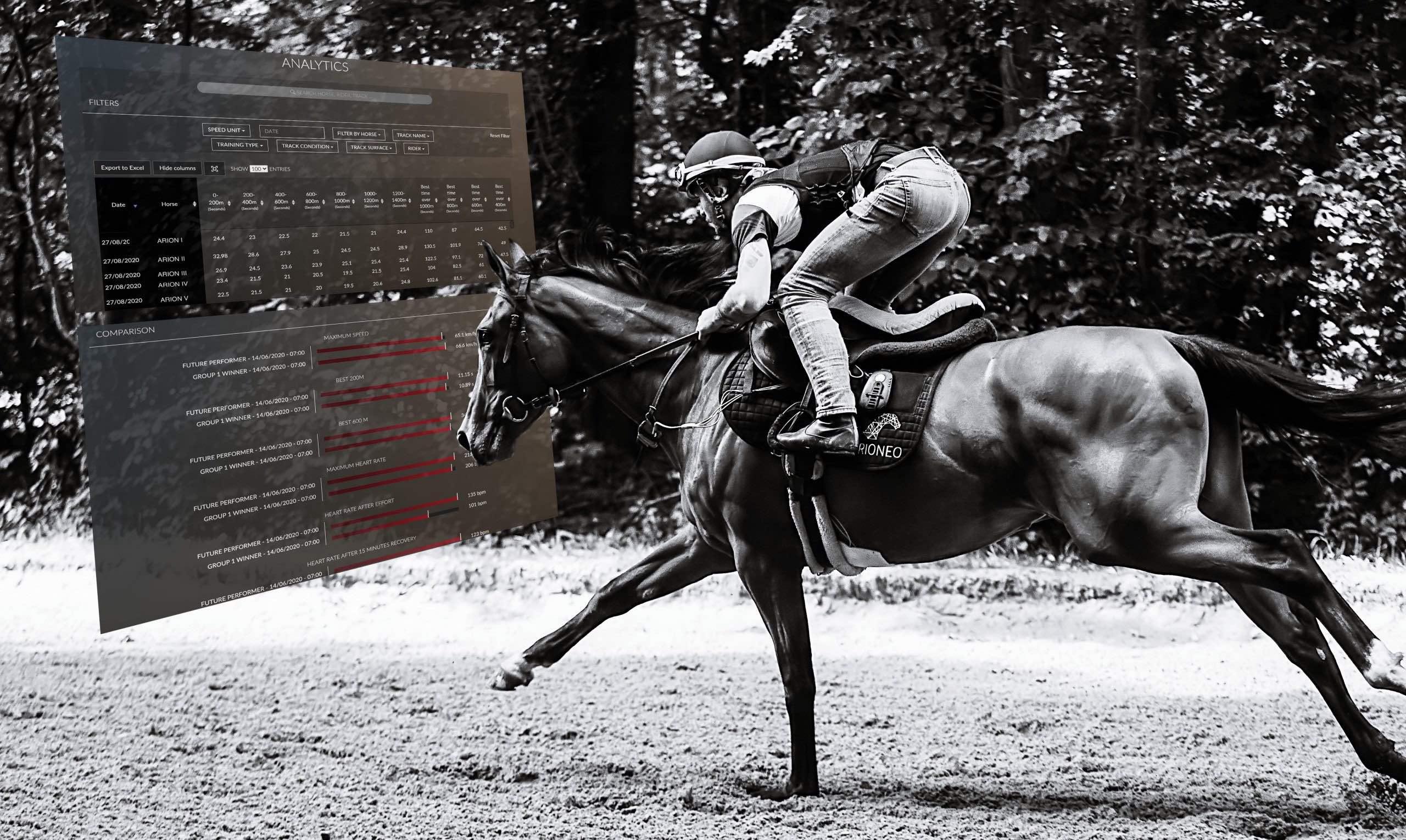 cheval course données