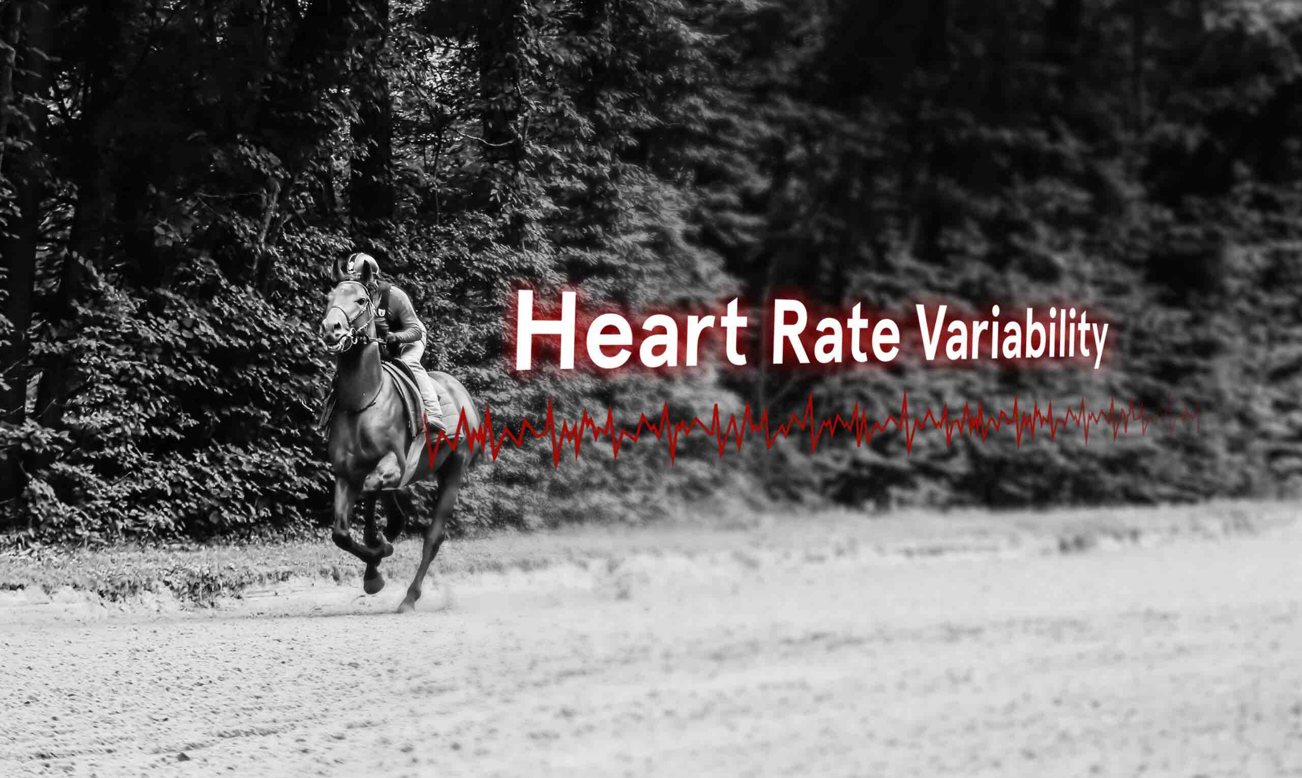 analyse heart rate variability with arioneo during racehorses training