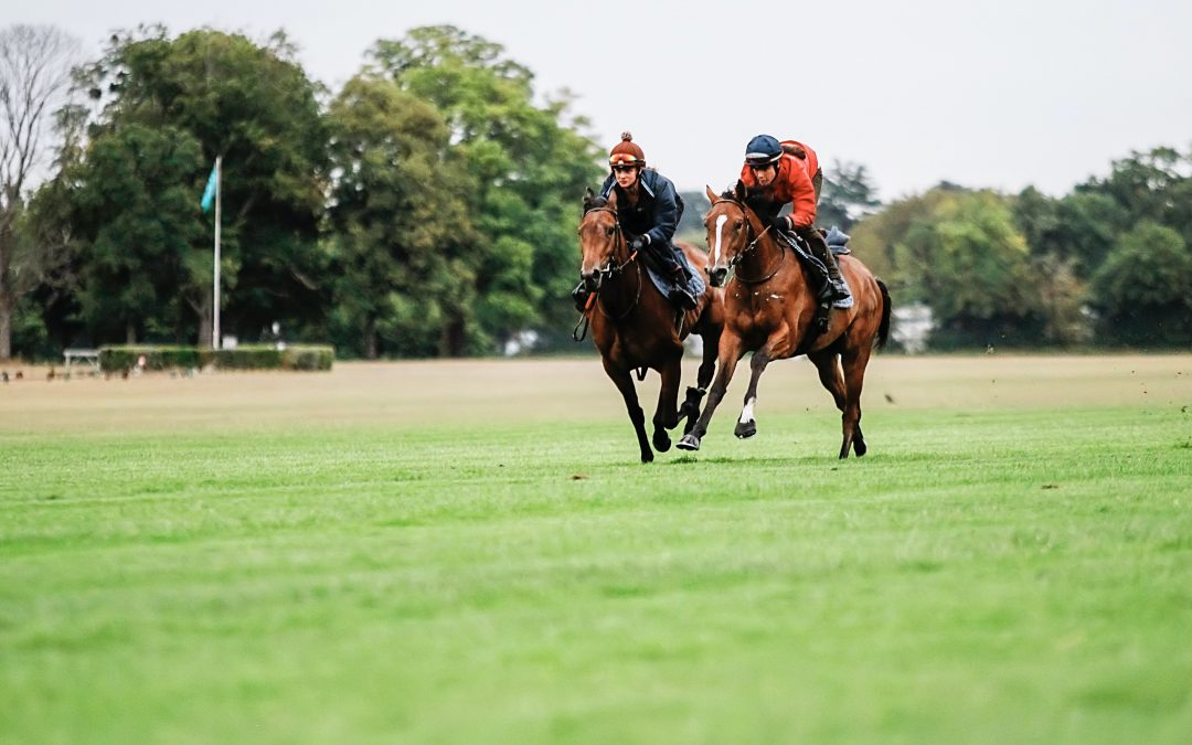 COMPARE THE TRAINING OF RACEHORSES WITH EQUIMETRE