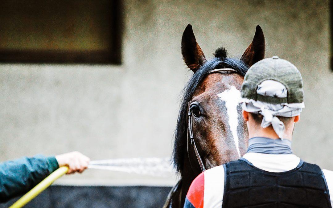 The demo horses of EQUIMETRE : a key tool