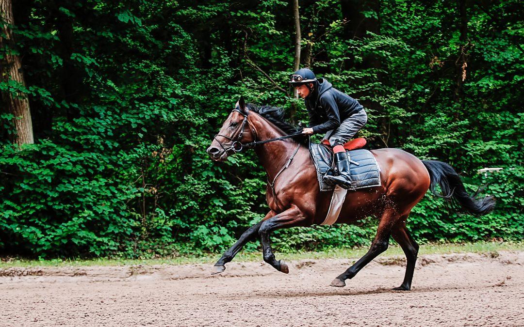The standardised effort test for racehorses in practice