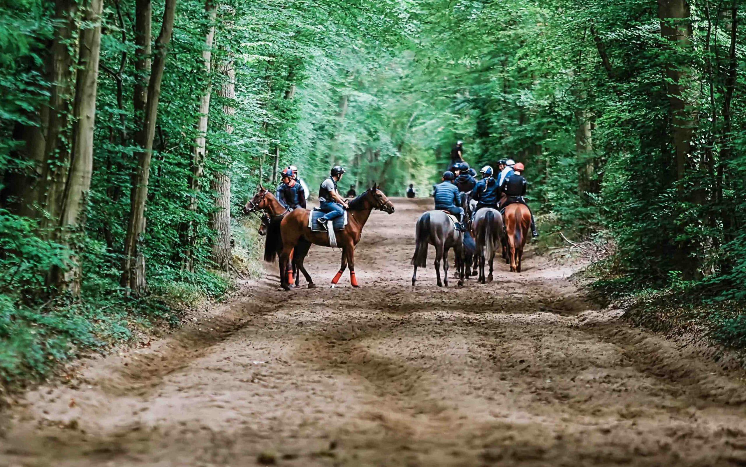 Chevaux de course à l'entraînement dans la forêt