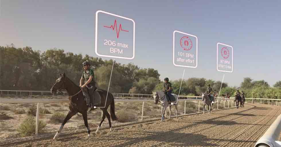 chevaux de course à l'entraînement sur une piste en sable
