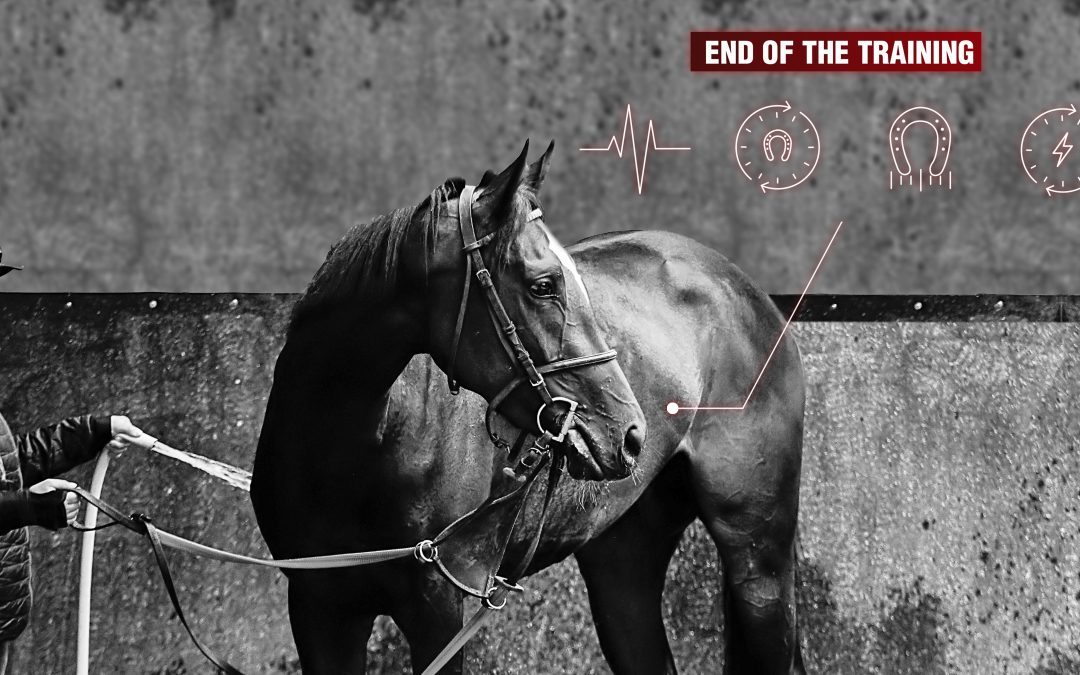 Analyzing horse locomotion to prevent the risk of lameness