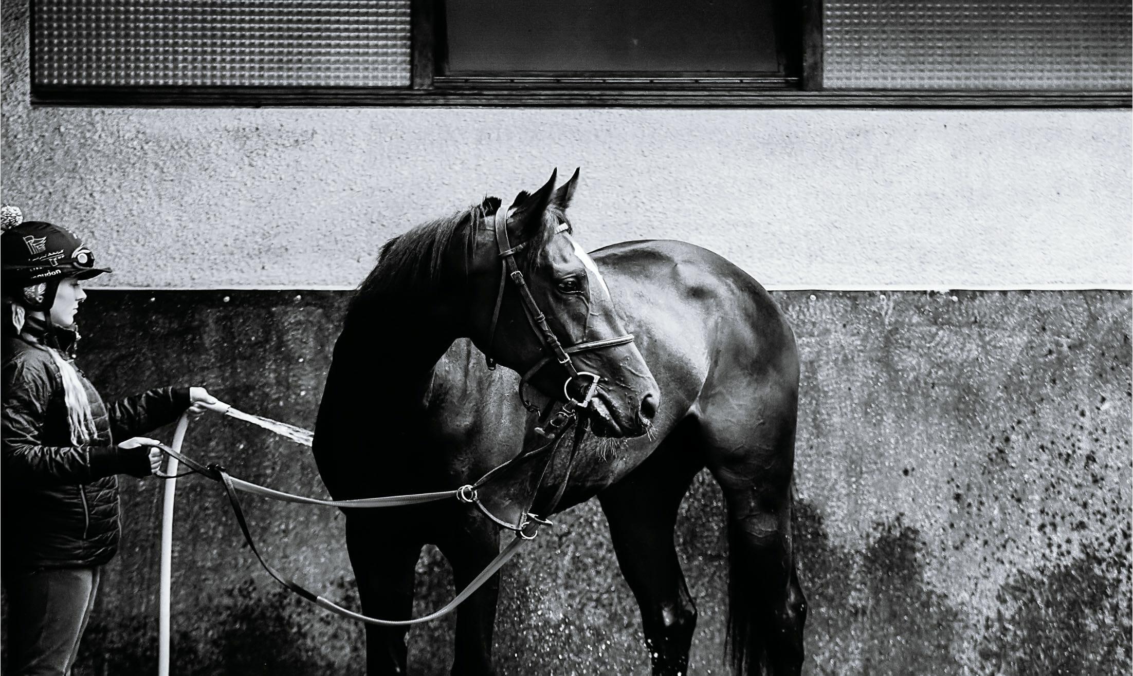 cheval écurie