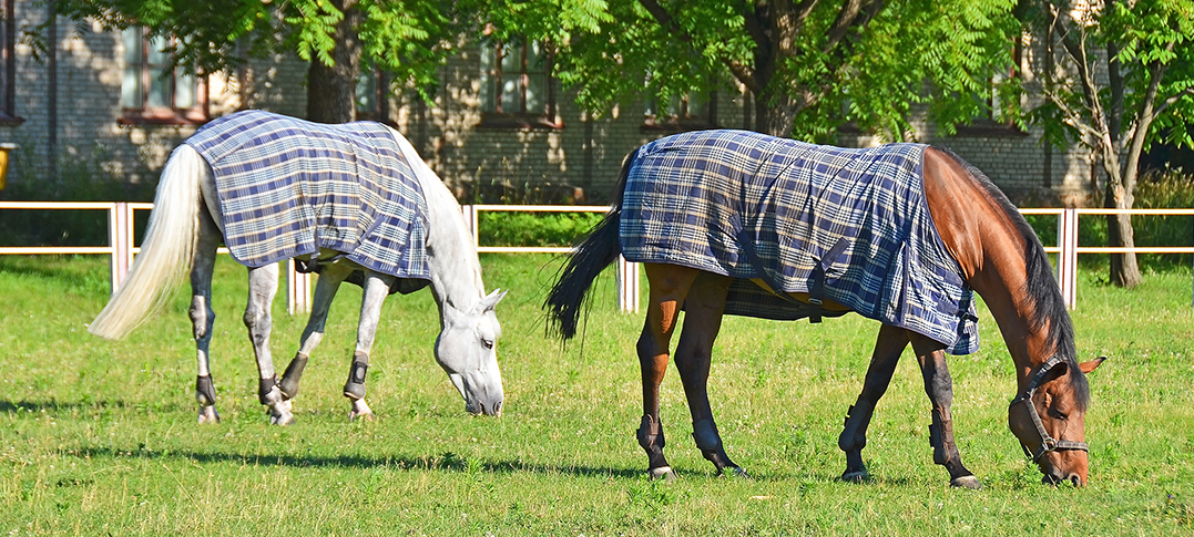 HOW TO MONITOR THE TEMPERATURE OF YOUR HORSE WITH ORSCANA ?