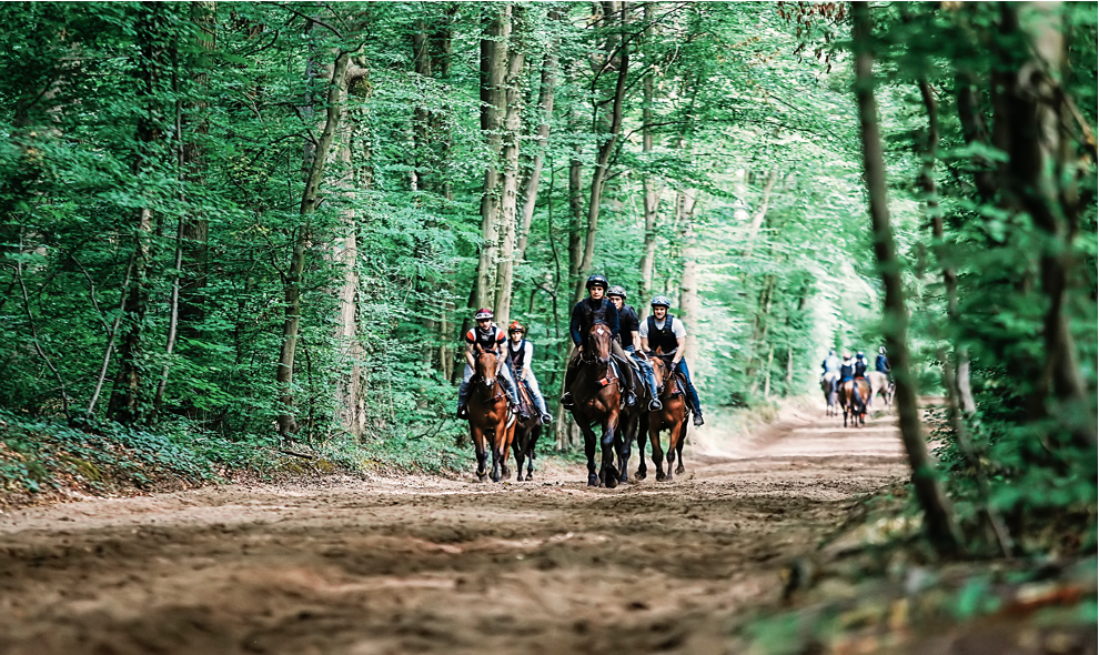 racehorses at training in the forest