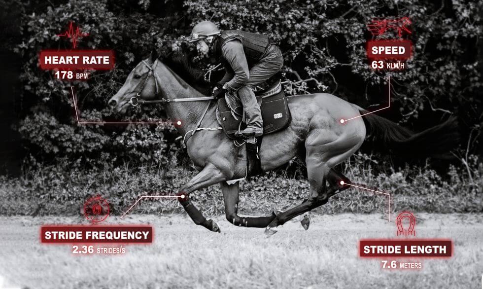 Optimiser le travail locomoteur du cheval de course