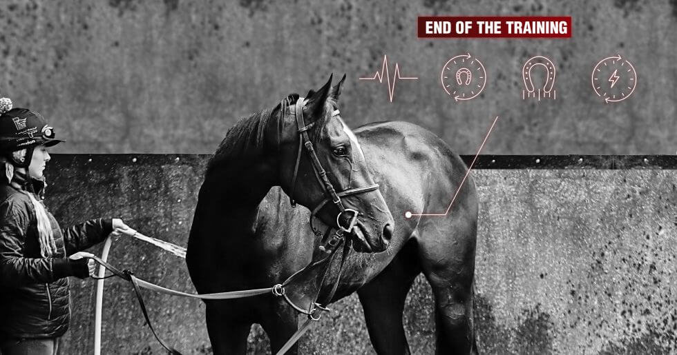 How to prevent the risk of lameness in racehorses?