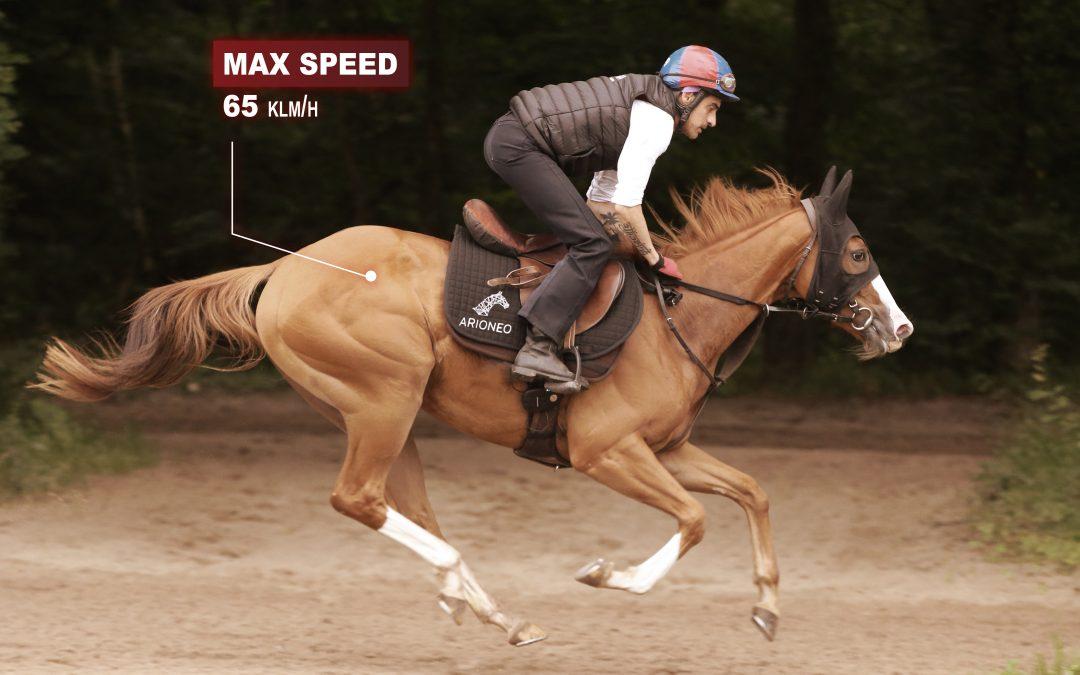 tenue de vitesse maximale chez le cheval de course à l'entraînement