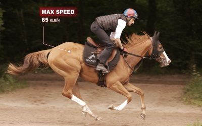 MAINTAINING MAXIMAL SPEED: THE KEY TO VICTORY IN HORSE RACING?