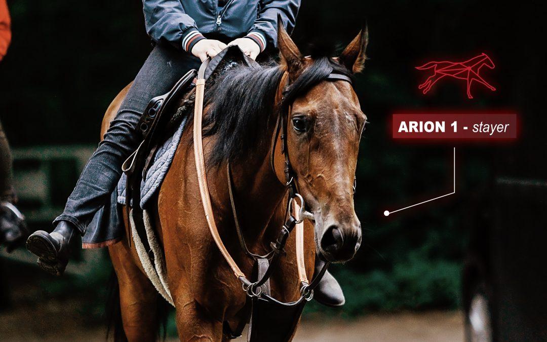 identifier & développer les spécialités de chaque cheval de course