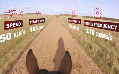 EQUIMETRE | On-board data for racehorses thanks to equine technology
