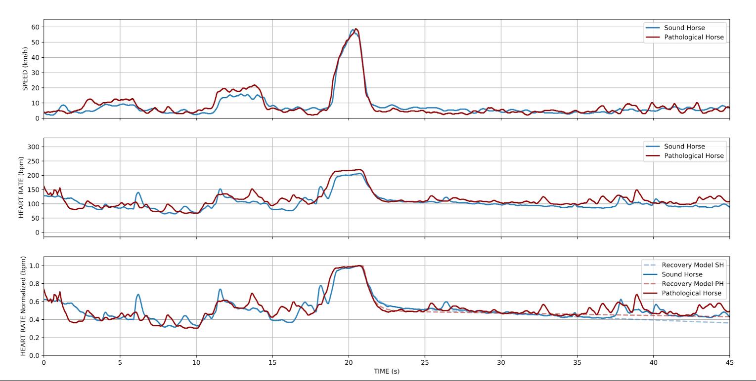 perte de performance chez le cheval de course analyse avec les données
