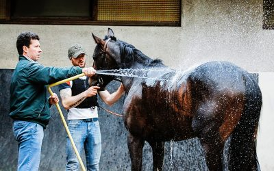 #RaceAndCare | How to prevent the risk of injuries in the racehorse?