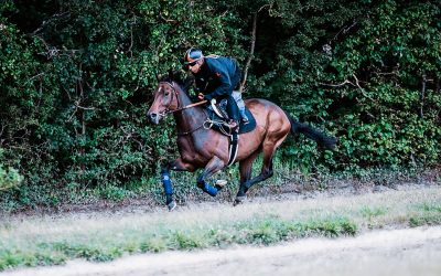 Underperformance in the racehorse: investigation through tangible data