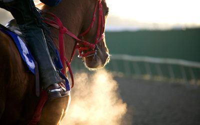 Performance loss in the racehorse: the role of the ECG