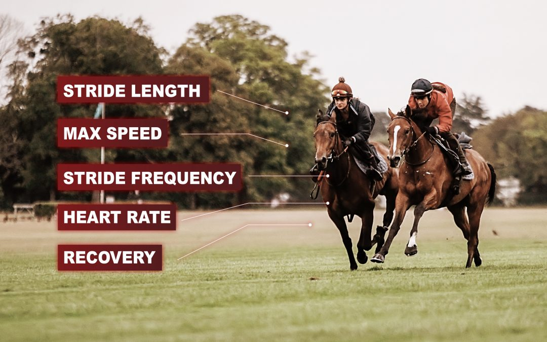 Debutant horses : how to prepare their first race ?