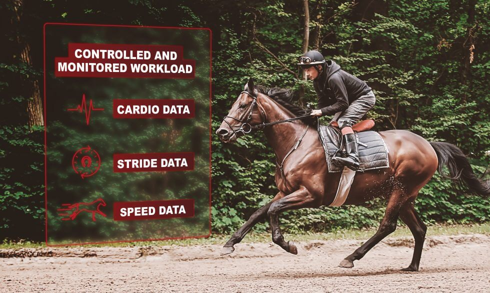 Why quantify the racehorse's training workload?