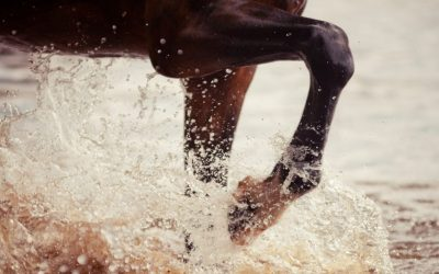 Introduction to balneotherapy for athlete horses