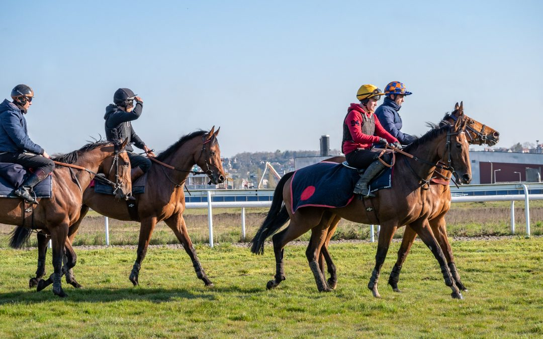Debutant horses: what can data comparison tell you
