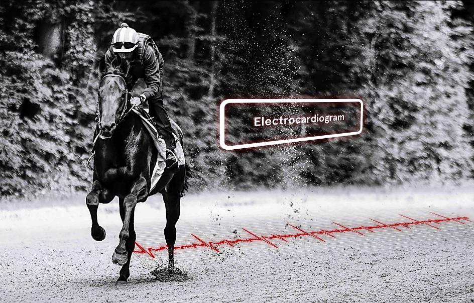 Analyse du cardio du cheval de course equimetre