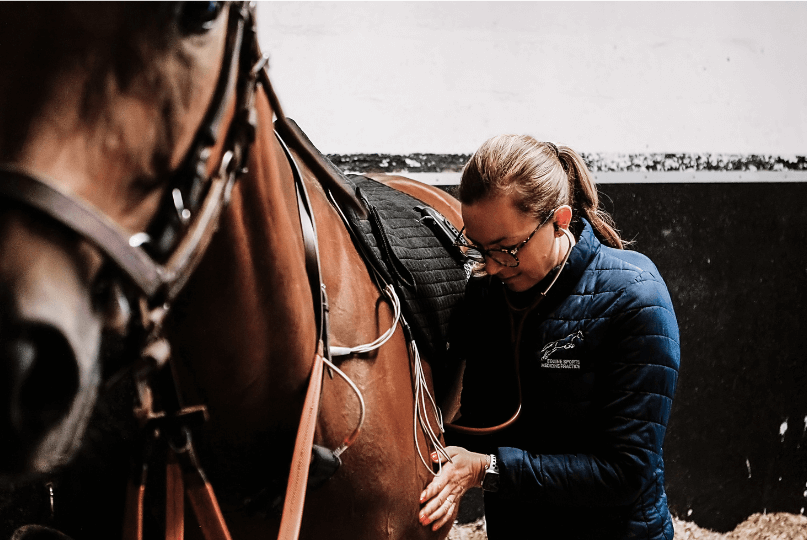 Dr Emmanuelle Van Erck qui ausculte un cheval de course bai dans son box