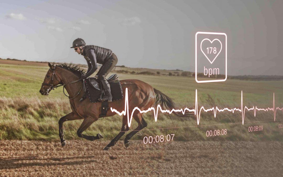 fréquence cardiaque du cheval de course