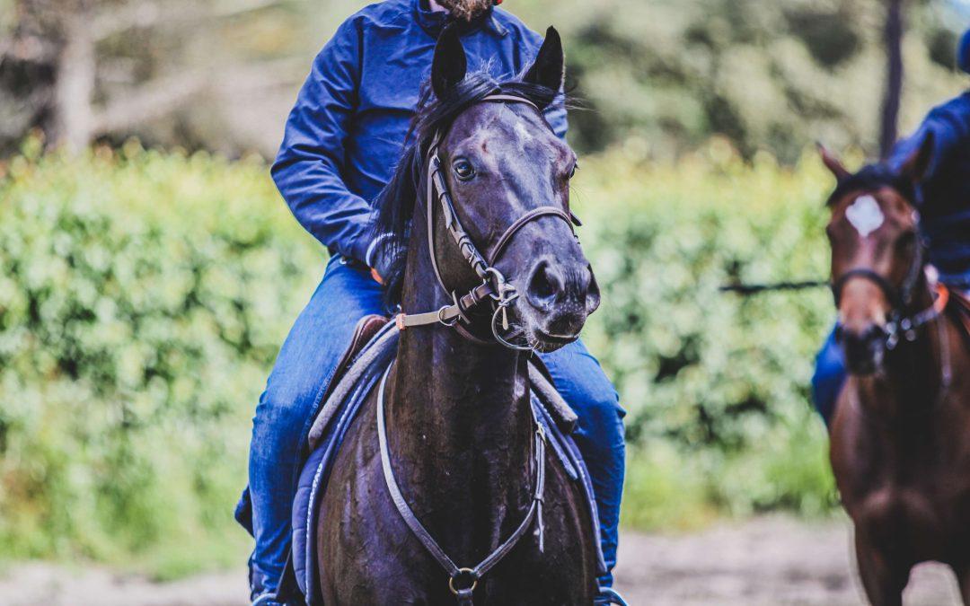 Détecter des pathologies chez le cheval de course grâce à la data