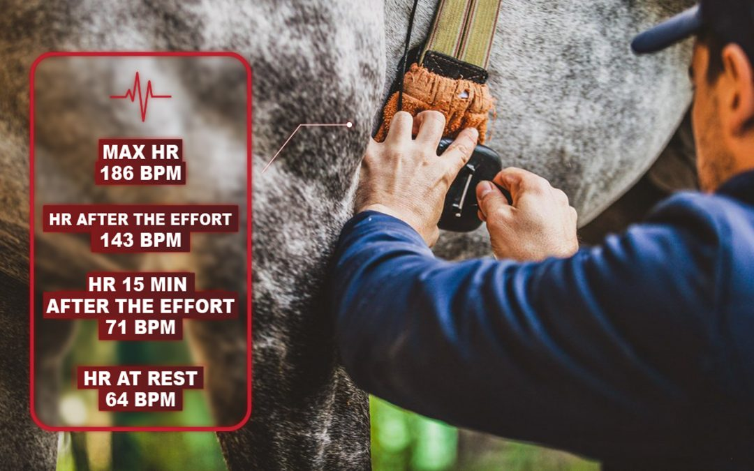 How to detect myocarditis in the racehorse thanks to equine technologies?