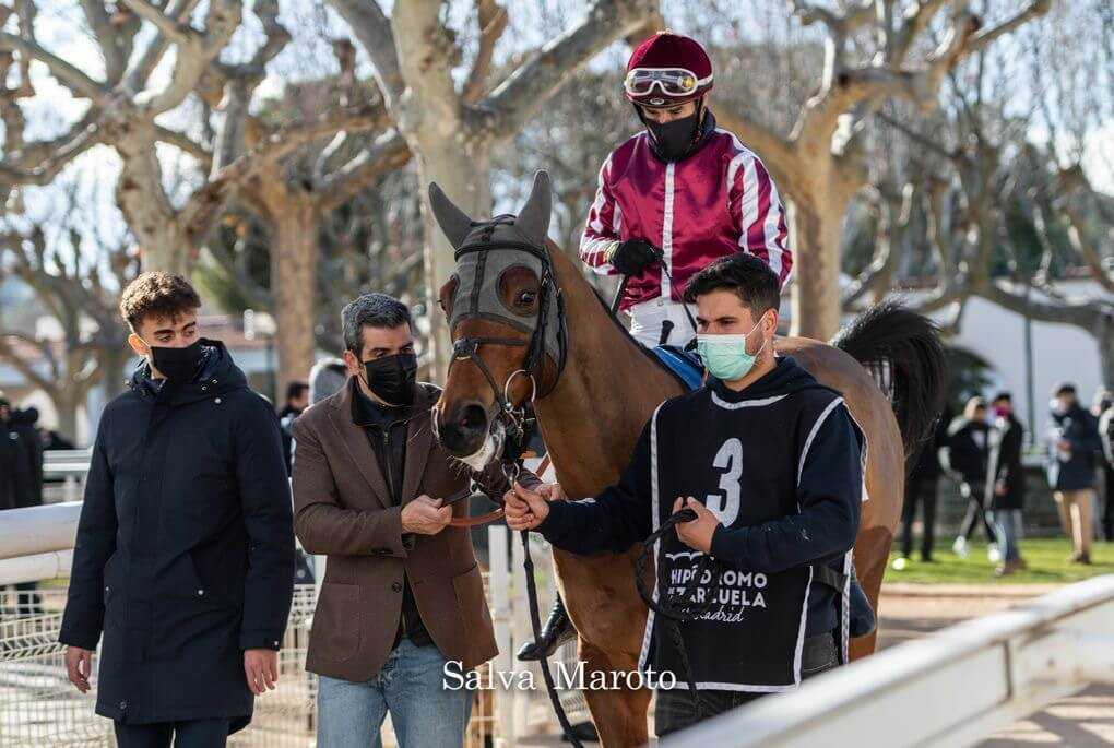 training racehorses with equimetre